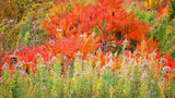 Flowers  Pink, Red, Orange Photo Greeting Cards/Note Cards - Set/8