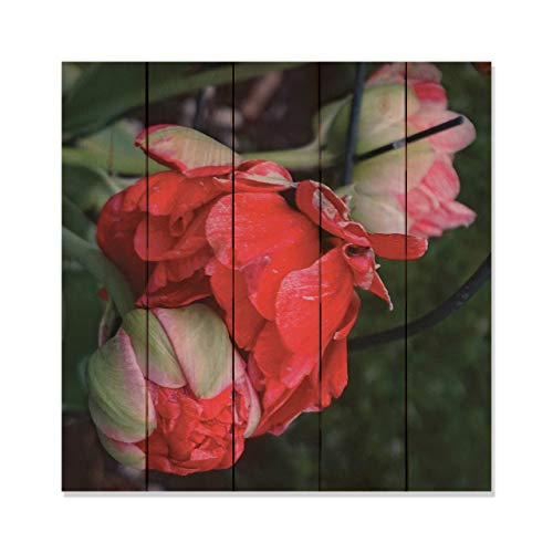 Montana Mottly Photos Red Rose Photo Picture Wall Hanging 17 by 17 Wile E. Wood Art™ …