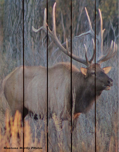 Lodge Bull Elk Wildlife Photo Picture Wall Hanging Cedar Board Gizaun Art. Wood Art™ 33x24