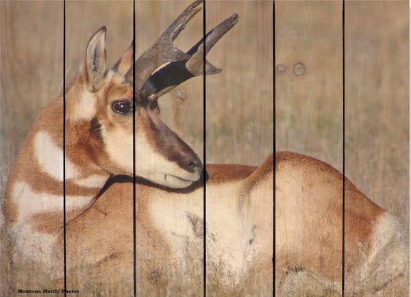 Antelope Buck Wildlife Photo Picture Wall Hanging Cedar Board Gizaun Art. Wood Art™ 33x24