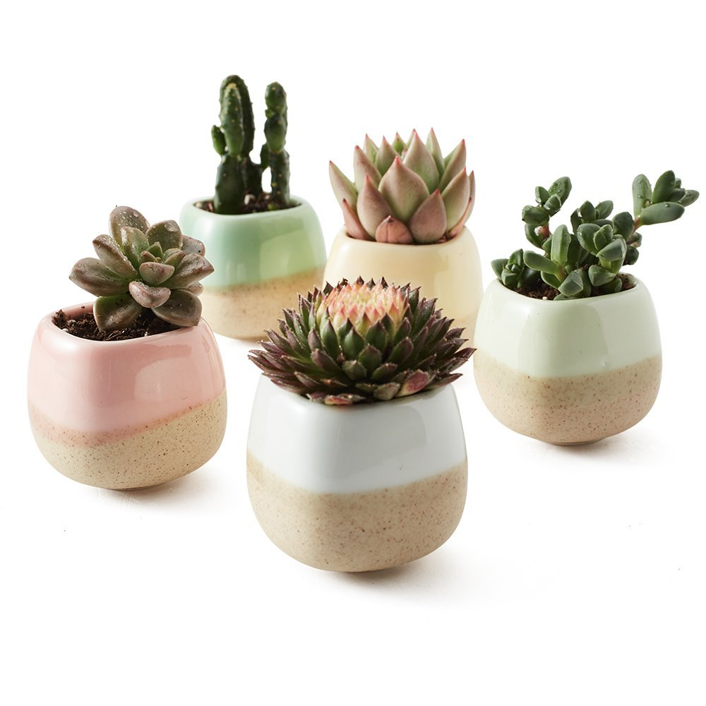 5 PC Baked Clay Ceramic Succulent Planter SET - GoGetGlam Boho Style