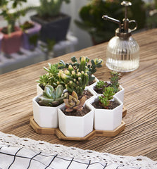 7pc Ceramic Succulent Planter on Bamboo Base - GoGetGlam Boho Style