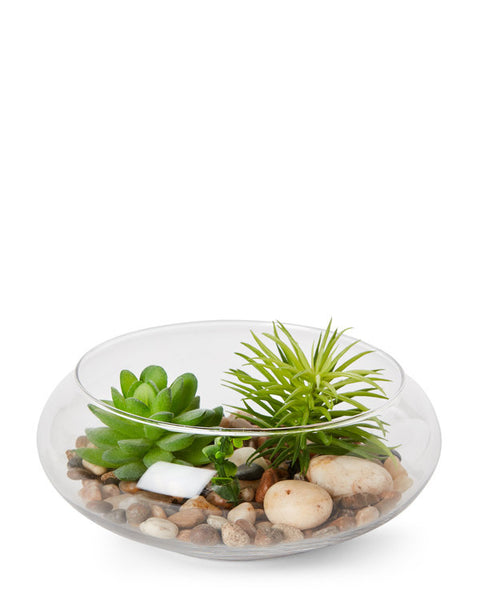 Glass Terrarium Kit