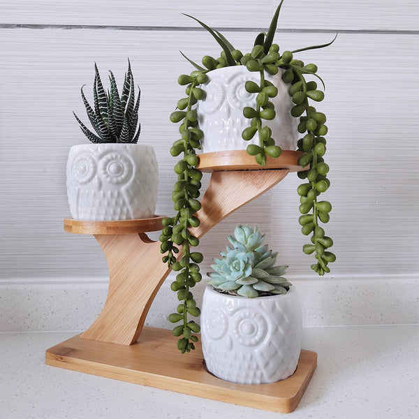 3pc Owl Succulent Plant 3-Tier Bamboo Saucer Stand - GoGetGlam Boho Style