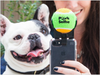 The Best Dog Selfies! Pooch Selfie: Dog Selfie Stick-GoGetGlam
