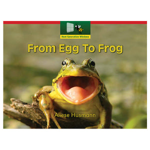 From Egg To Frog