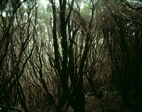 Rata Forest