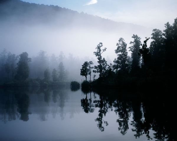 Paringa Mist Forest