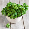 The Benefits of Kale–Part of Our Whole Body and Oral Health Superfoods Series
