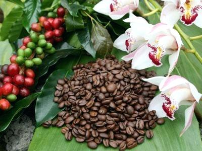 A Newbie's Guide to the Best Hawaiian Kona Coffee
