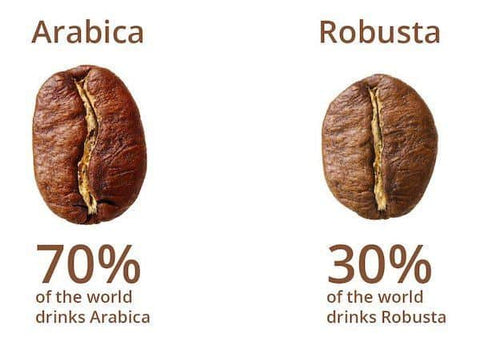 arabica, arabica coffee, robusta, robusta coffee, gourmet coffee, types of coffee beans