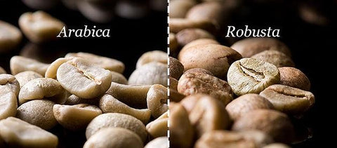 arabica coffee, gourmet coffee, types of coffee beans