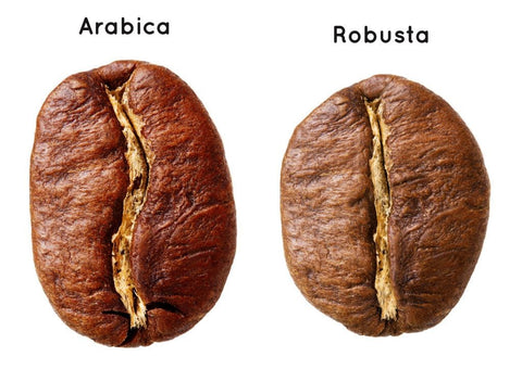 arabica coffee, types of coffee, types of coffee beans, gourmet coffee, robusta coffee