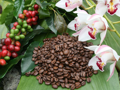 best kona coffee hawaii, best kona coffee beans, hawaiian coffee, arabica coffee, gourmet coffee