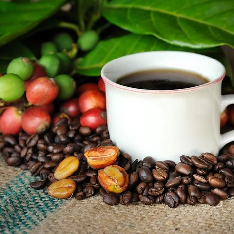 What makes the best Kona coffee Hawaii so exclusive? | Hawaiian coffee