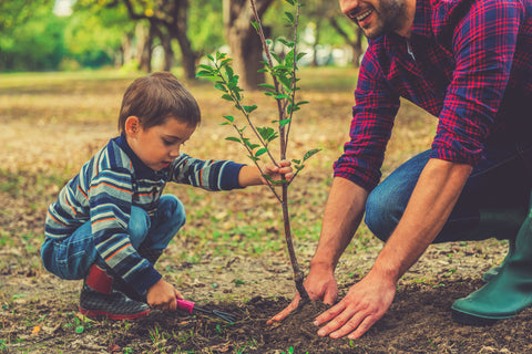 kid and dad planting tree