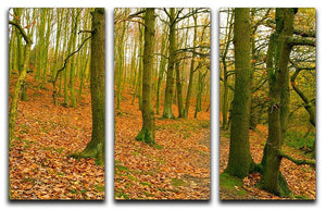 A path through the woods at Haw park 3 Split Panel Canvas Print - Canvas Art Rocks - 1