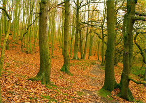 A path through the woods at Haw park Wall Mural Wallpaper - Canvas Art Rocks - 1