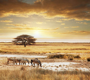 African safari Wall Mural Wallpaper - Canvas Art Rocks - 1