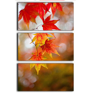 Autumn Colours 3 Split Panel Canvas Print - Canvas Art Rocks - 1
