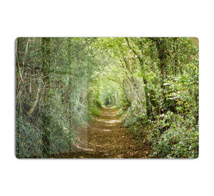 Avenue of trees HD Metal Print