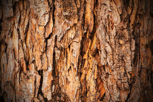 Bark texture Wall Mural Wallpaper - Canvas Art Rocks - 1