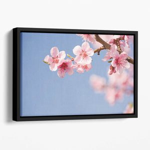Beautiful colorful fresh spring flowers Floating Framed Canvas