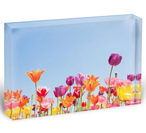 Beautiful coloured flowers Acrylic Block - Canvas Art Rocks - 1