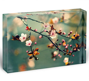 Beautiful flowering Japanese cherry Acrylic Block - Canvas Art Rocks - 1