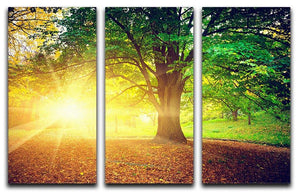 Beautiful park 3 Split Panel Canvas Print - Canvas Art Rocks - 1