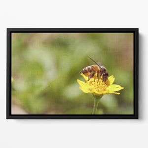 Bee and small sunflower Floating Framed Canvas
