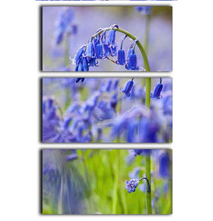 Bluebells 3 Split Panel Canvas Print - Canvas Art Rocks - 1