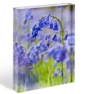 Bluebells Acrylic Block - Canvas Art Rocks - 1