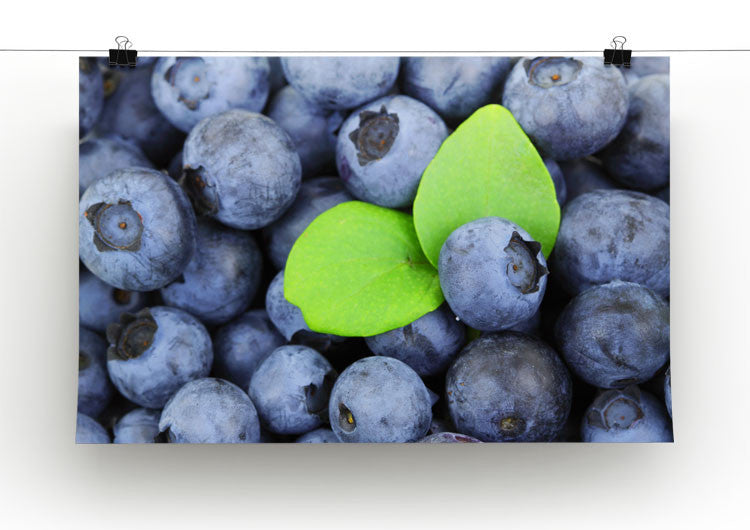Pictures Of Blueberries To Print