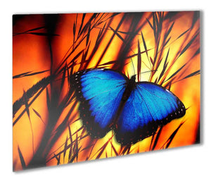 Butterfly Metal Print - Canvas Art Rocks - 1