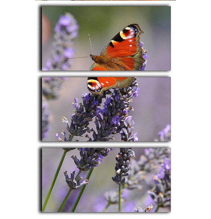 Butterfly on Lavender 3 Split Panel Canvas Print