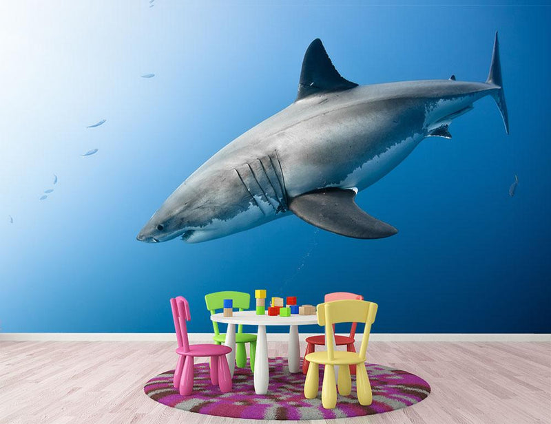 Carcharodon carcharias in pacific ocean Wall Mural Wallpaper - Canvas Art Rocks - 1