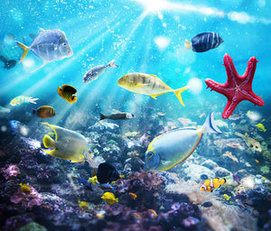 Colourful fish and marine vegetation undersea with sunray Wall Mural Wallpaper - Canvas Art Rocks - 1