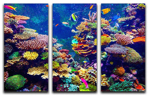 Coral Reef and Tropical Fish 3 Split Panel Canvas Print - Canvas Art Rocks - 1