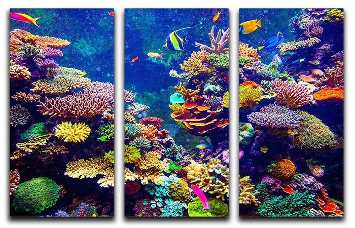 Coral Reef and Tropical Fish 3 Split Panel Canvas Print