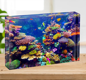 Coral Reef and Tropical Fish Acrylic Block - Canvas Art Rocks - 2