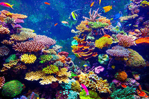 Coral Reef and Tropical Fish Wall Mural Wallpaper - Canvas Art Rocks - 1