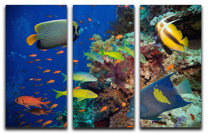 Coral Reef on Red Sea 3 Split Panel Canvas Print - Canvas Art Rocks - 1