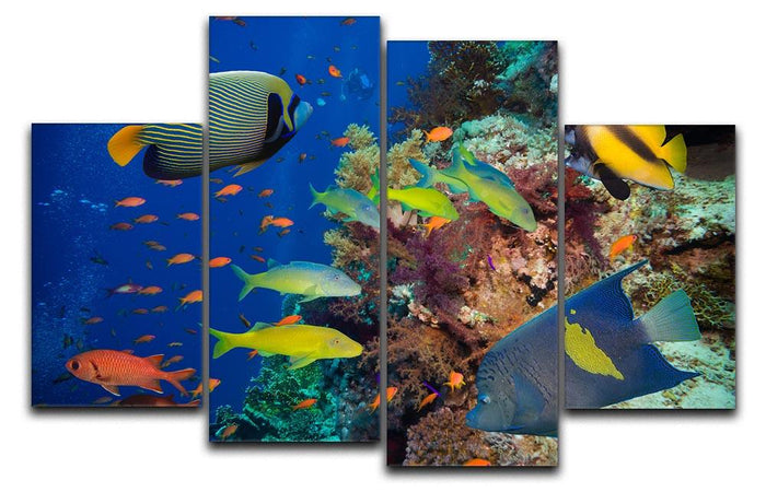 Coral Reef on Red Sea 4 Split Panel Canvas