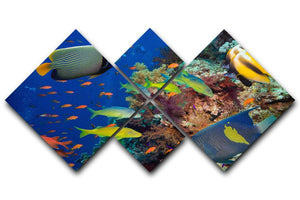 Coral Reef on Red Sea 4 Square Multi Panel Canvas  - Canvas Art Rocks - 1