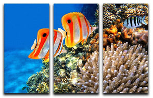 Coral reef and Copperband butterflyfish 3 Split Panel Canvas Print - Canvas Art Rocks - 1