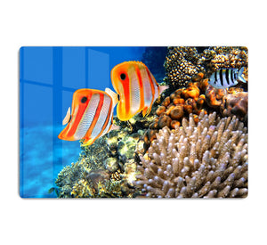 Coral reef and Copperband butterflyfish HD Metal Print