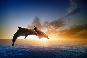 Couple jumping dolphins Wall Mural Wallpaper - Canvas Art Rocks - 1