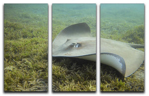 Darkspotted stingray 3 Split Panel Canvas Print - Canvas Art Rocks - 1