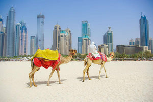 Dubai Camel on the town scape backround Wall Mural Wallpaper - Canvas Art Rocks - 1